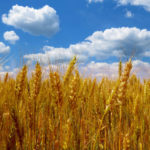 Why Should People with Autoimmune Disease Avoid GM Food?