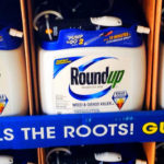 Does Monsanto's  Herbicide Roundup screw with your Hormones?
