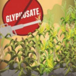 Monsanto's GMO Herbicide Glyphosate Doubles Cancer Risk